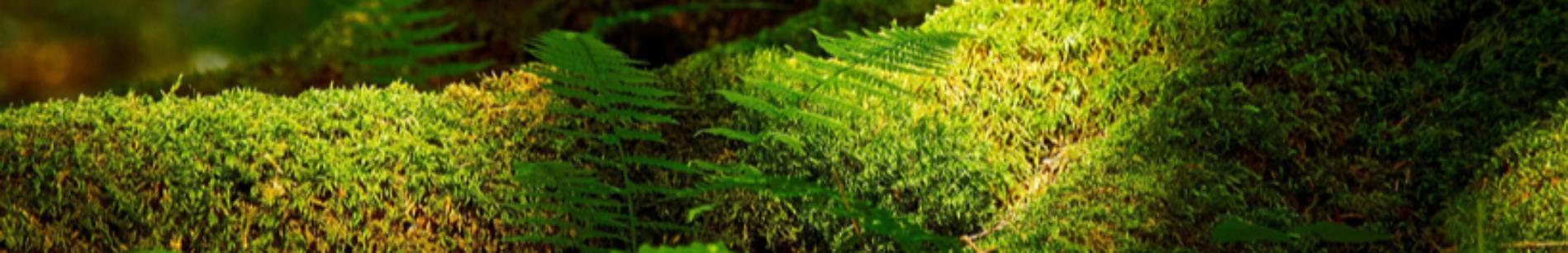 Bandeau Biodiv ©Pixabay-Hagertal
