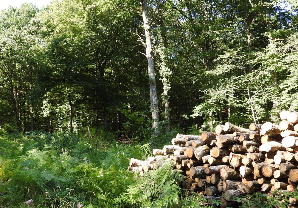 Bois Forêt des Bertranges - ©CCLB