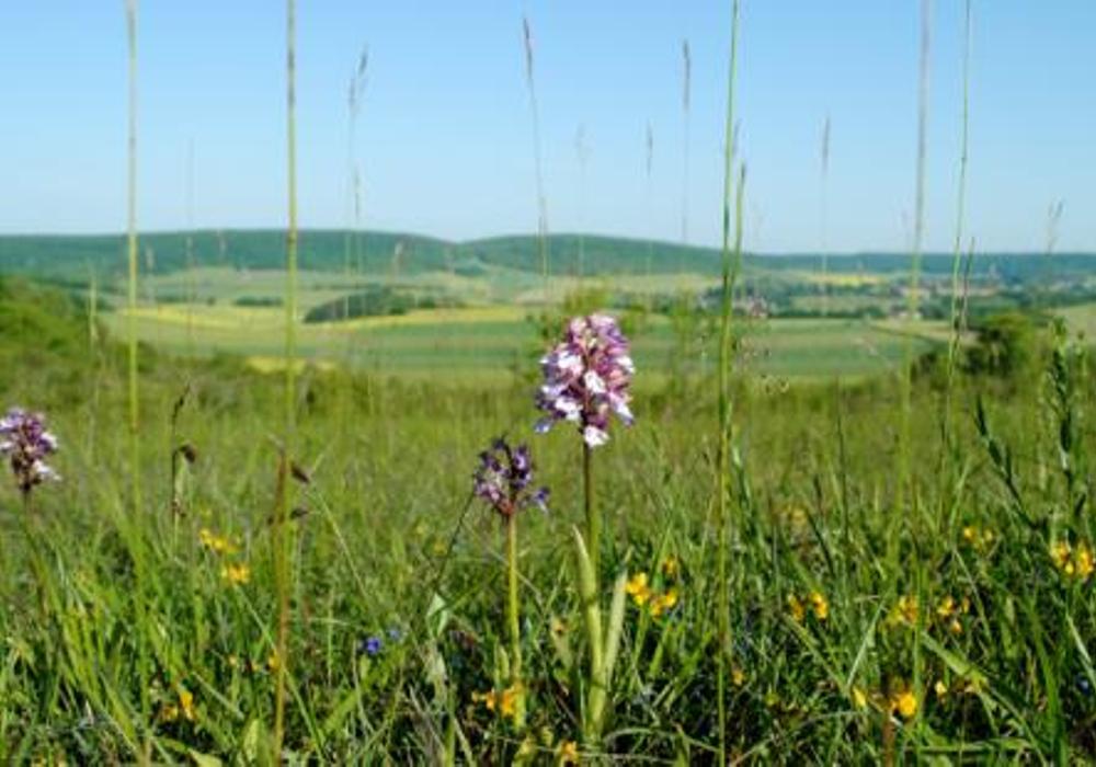Butte des Orchidées ©ADT 58