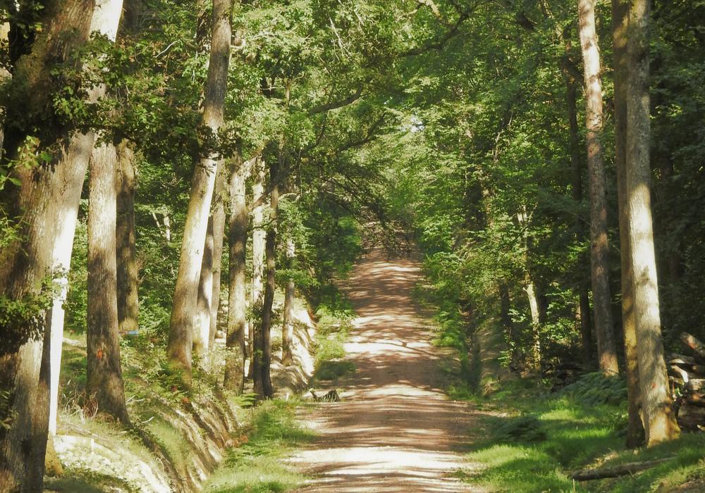 Chemin Forêt des Bertranges - ©CCLB
