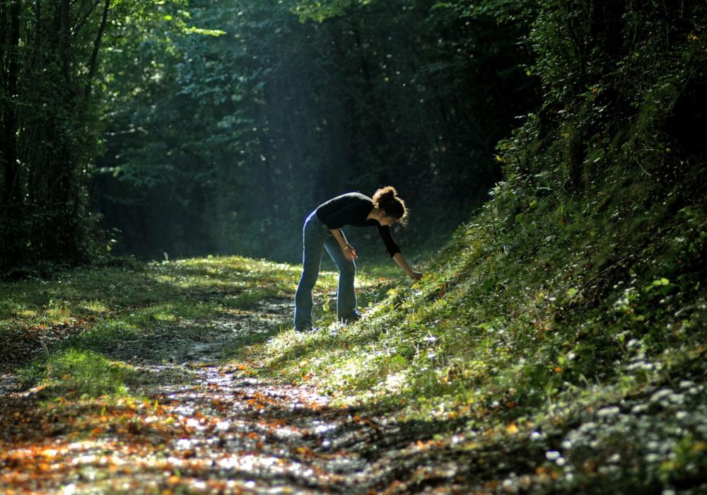 Cueillette Forêt des Bertranges ©Ch.Goupi