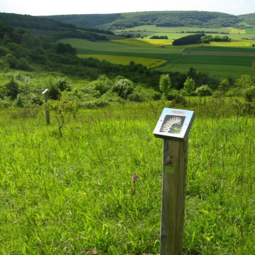 Sentier de la pelouse calcaire - Arbourse ©CCLB