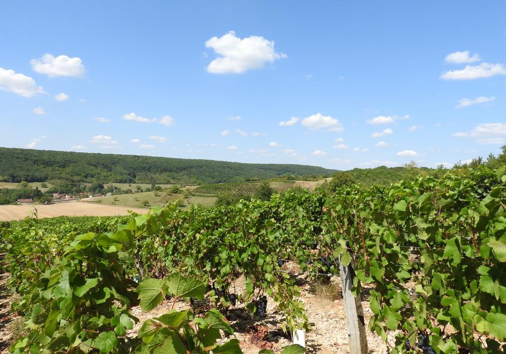 Vignes Nannay ©CCLB