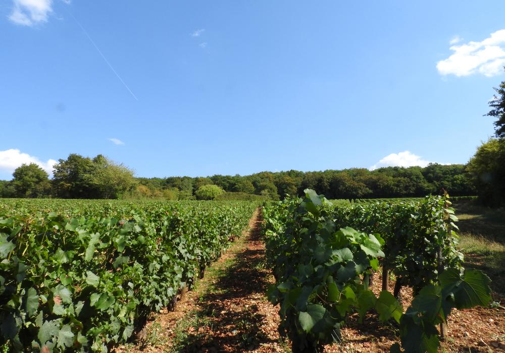Vignes Saint-Lay ©CCLB