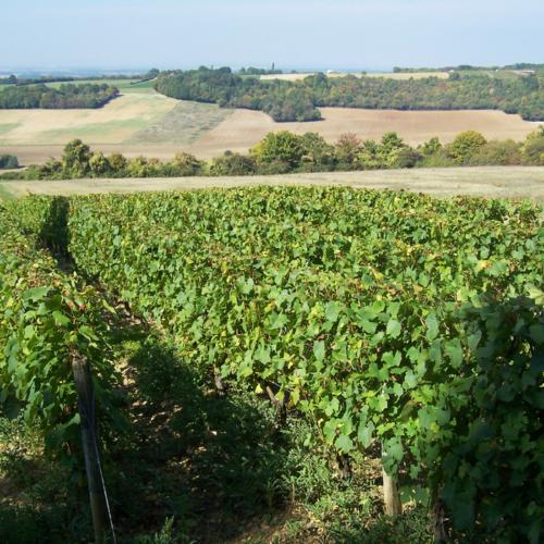 Viticulture La Celle-sur-Nièvre ©Pays Charitois