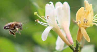 biodiversité-2